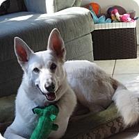 Adopt A Pet :: Keelo - Green Cove Springs, FL