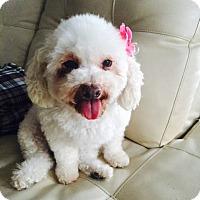 Adopt A Pet :: Luna - Orange, CA