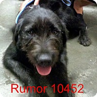 Adopt A Pet :: Rumor - Greencastle, NC