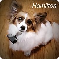Adopt A Pet :: Hamilton - Franklinton, NC