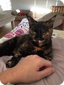 Domestic Shorthair Cat for adoption in Manteo, North Carolina - Matilda