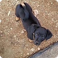Adopt A Pet :: Natalia - Buchanan Dam, TX