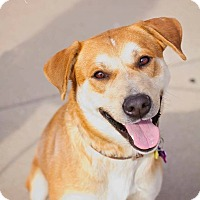 Adopt A Pet :: Butler (In Pups on Parole) - Springfield, MO