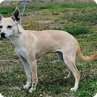 Adopt A Pet :: Lucy - Parsons, KS