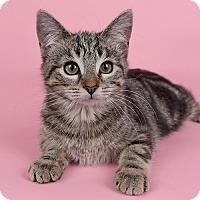Adopt A Pet :: Yoshi - Wilmington, DE