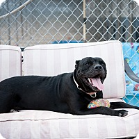 Adopt A Pet :: Gracie - Wichita Falls, TX