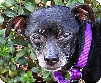 Terrier (Unknown Type, Medium) Mix Dog for adoption in Seal Beach, California - Cash