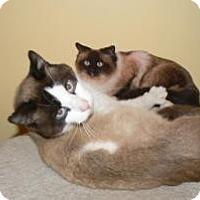 Adopt A Pet :: Bentley - Clarksville, IN