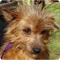 Adopt A Pet :: Rosa - Allentown, PA