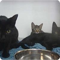 Adopt A Pet :: Camden, Katie & Kit Kat - Winter Haven, FL