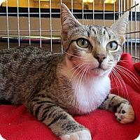 Adopt A Pet :: Jersey - Seminole, FL