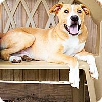 Adopt A Pet :: Luke - Gadsden, AL