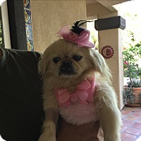 Adopt A Pet :: Cookie (in adoption process) - El Cajon, CA
