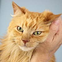Adopt A Pet :: Rusty - Palm Springs, CA
