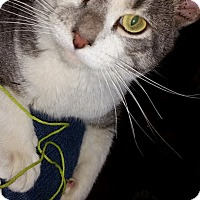 Adopt A Pet :: Harrison - St. Louis, MO
