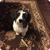 Adopt A Pet :: Oreo - Flower Mound, TX