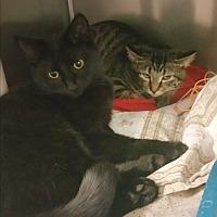 Adopt A Pet :: Natasha - Chippewa Falls, WI