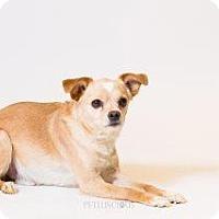 Adopt A Pet :: Mikey - Los Alamos, NM