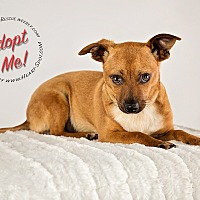 Adopt A Pet :: Rusty - Gainesville, GA