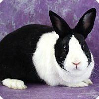 Adopt A Pet :: Willow - Wilmington, NC