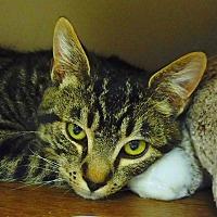 Adopt A Pet :: Tommy - Creston, BC