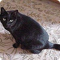 Adopt A Pet :: Leroy Brown - Laguna Woods, CA