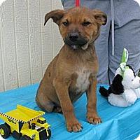 Adopt A Pet :: Pitch - Humboldt, TN