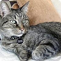 Adopt A Pet :: Epiphany - Alexandria, VA