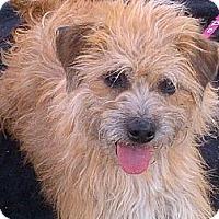 Adopt A Pet :: Bridget - Santa Monica, CA