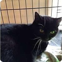 Adopt A Pet :: Jolene - Wenatchee, WA