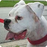 Adopt A Pet :: Gracie - Thomasville, GA