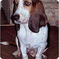 Adopt A Pet :: Frieda - Phoenix, AZ