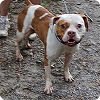 Adopt A Pet :: Jughead - Tinton Falls, NJ