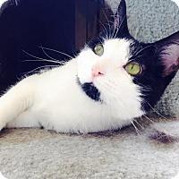 Adopt A Pet :: Emma Roberts - Richboro, PA