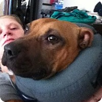 Adopt A Pet :: RODNEY- PENDING ADOPTION - Birmingham, MI