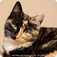 Adopt A Pet :: Ginger - Fountain Hills, AZ