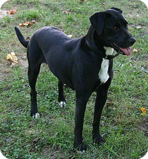 Labrador Retriever Mix Dog for adoption in Waldorf, Maryland - Princess ADOPTION PENDING