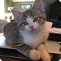 Adopt A Pet :: Gia - Columbus, OH