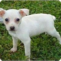 Adopt A Pet :: Isaiah - Allentown, PA