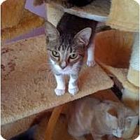 Adopt A Pet :: Curly - Mobile, AL