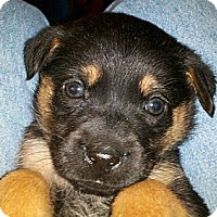 Adopt A Pet :: MISSY - Torrance, CA