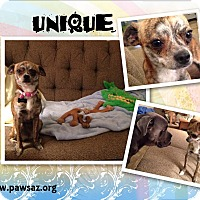 Adopt A Pet :: UNIQUE - Higley, AZ