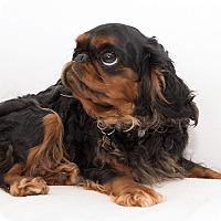 Adopt A Pet :: Lillian - Cumberland, MD