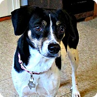 Adopt A Pet :: Gracie - Freeport, ME
