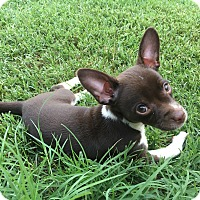 Adopt A Pet :: Froggy - Glastonbury, CT