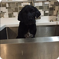 Adopt A Pet :: Max - Stamford, CT