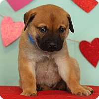 Adopt A Pet :: Colby - Waldorf, MD