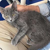 Adopt A Pet :: Zaria - Colorado Springs, CO