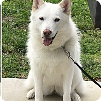 Adopt A Pet :: Sakari - Apple valley, CA