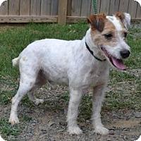 Adopt A Pet :: Newman in Houston - Houston, TX